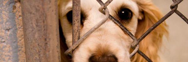 Câmara aprova projeto que aumenta pena de maus-tratos contra animais e zoofilia
