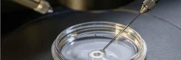 Em decisão inédita, transportadora é responsabilizada por inviabilidade de embriões