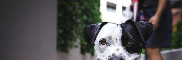 Guia Prático: O que você precisa saber sobre animais em condomínio?