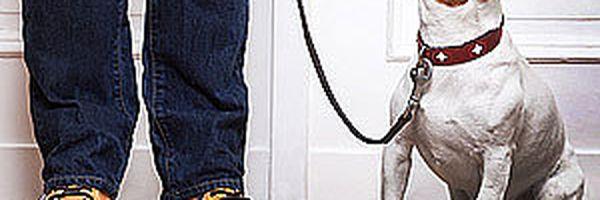 Multa por circulação de animais em elevador social é válida, decide TJ-SP