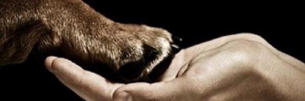 Direitos dos animais: eu acredito e você?