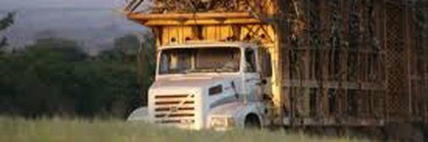 Turma do TST considera lícita terceirização do transporte de cana por usina de açúcar e de álcool
