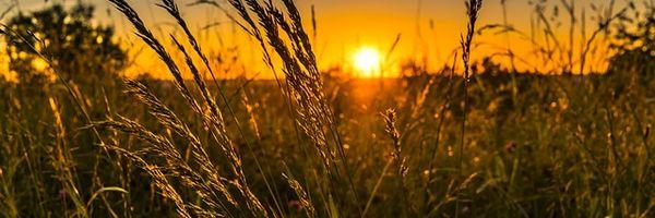 Planejamento Sucessório Rural: Uma Solução para perpetuação do negócio