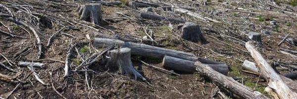 Fundo de pensão bilionário da Noruega pensa em não investir mais no Brasil por desmatamento na Amazônia