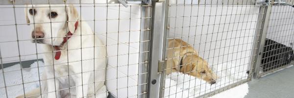 Sancionada lei que proíbe sacrifício de cães e gatos saudáveis