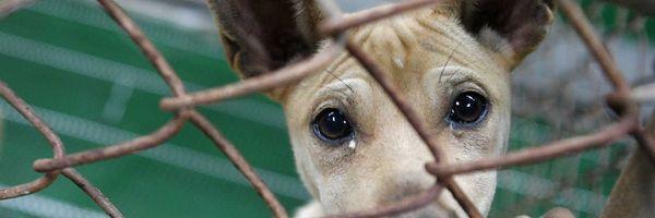 Qual a pena pela morte de animais abandonados, como no caso Carrefour?