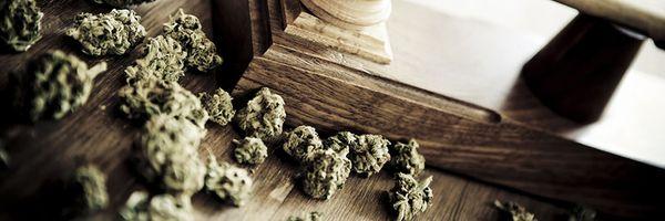 """Cannabis (""""maconha"""") para uso medicinal."""