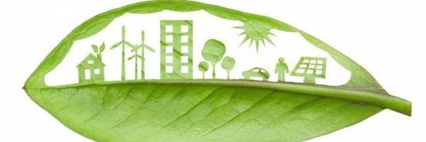 O que são Princípios e quais os mais conhecidos no Direito Ambiental?