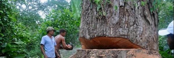 Erro de proibição e ausência de dano em Crime Ambiental