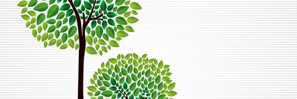 A importância do Código Florestal no atual contexto brasileiro