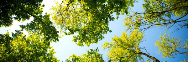 As árvores conseguiram seus direitos na França