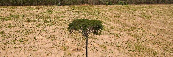 Princípios aplicáveis ao Processo Administrativo Ambiental