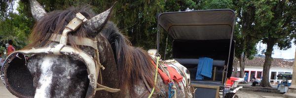 Tração animal: Reynaldo Velloso diz que Comissão irá começar a luta em Paraty