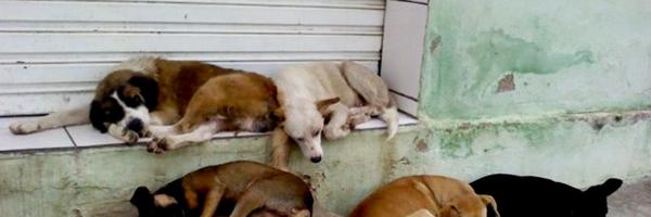Juíza manda município construir abrigo para cães e gatos de rua e proíbe eutanásia de animais saudáveis