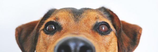 Homem é preso por molestar cadela