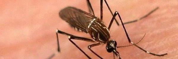 Mãe e filha são presas sob acusação de não combater mosquito da dengue