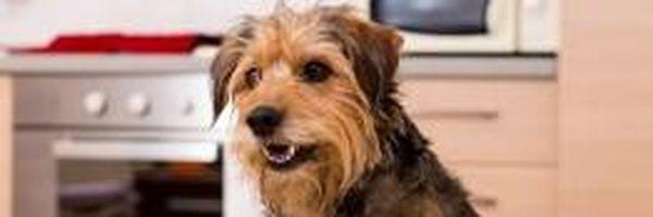 Cachorros em apartamento: saiba tudo sobre seus direitos e deveres