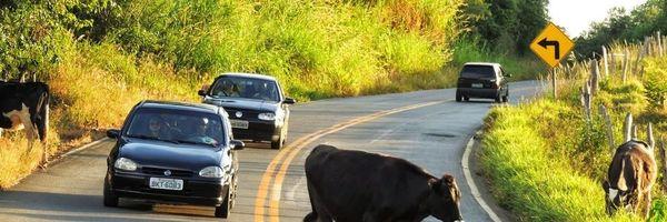 DNIT é condenado por acidente causado por animal em BR