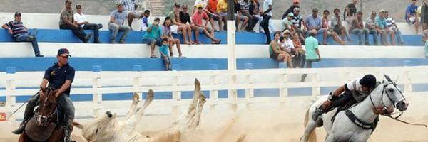 Reynaldo Velloso: cultura e tradição não podem camuflar a prática de crueldades