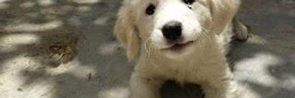 Quem adotar um animal abandonado terá desconto no IPTU em SC