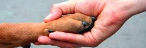 Projeto passa a considerar animais como bens móveis e não mais como coisas