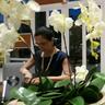 Rosangela Barbosa Gomes, Estudante de Direito
