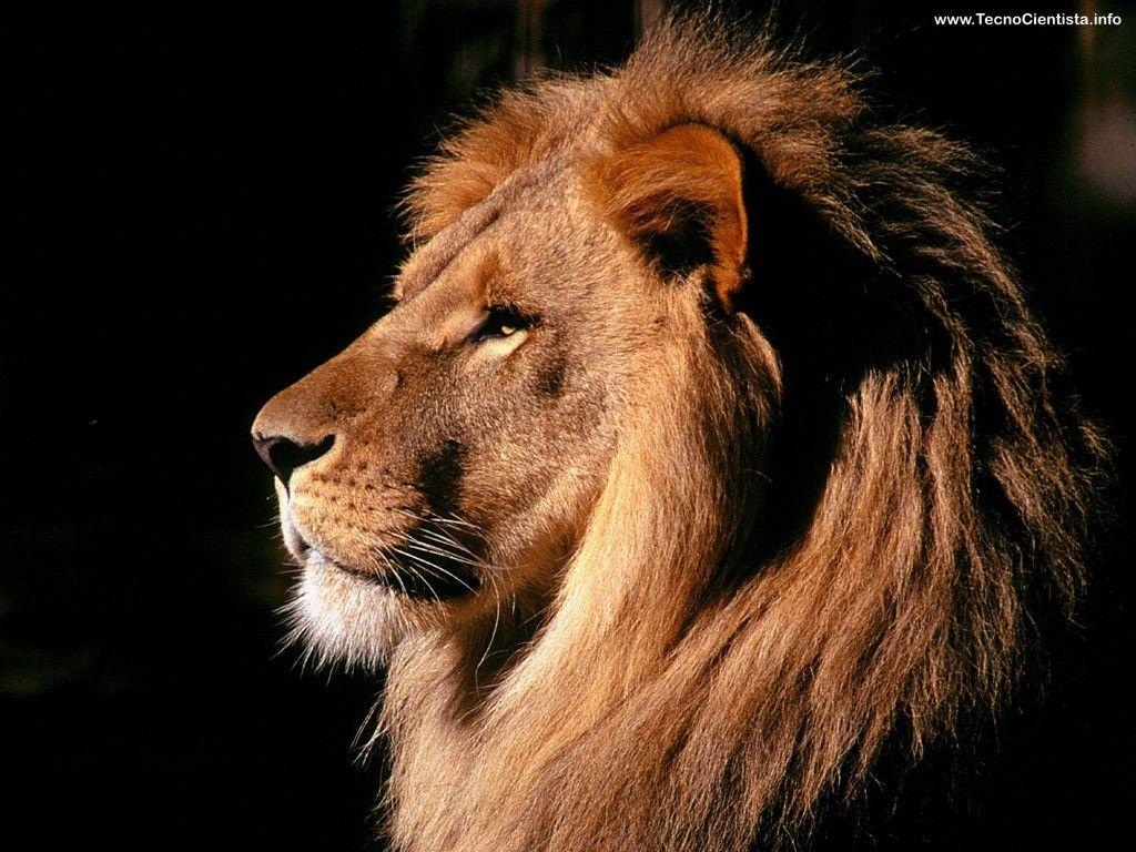 Top 10 animais favoritos 1412967253