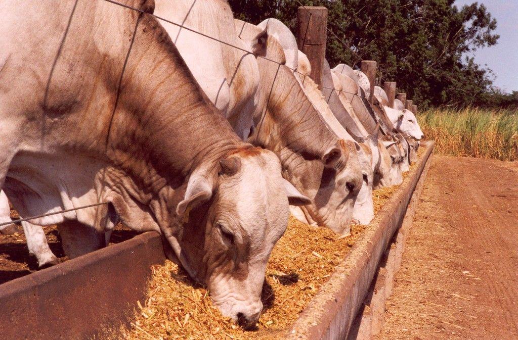 Povo dbil congresso hbil Arrebanha-se o gado novamente