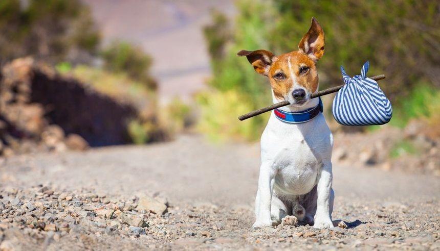 Guarda alternada - animais domsticos trs perplexidades na defesa de seus interesses