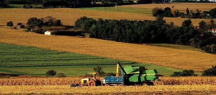 Contrato de Arrendamento Rural Nulidade de Clusula que fixa pagamento em Produtos ou Frutos