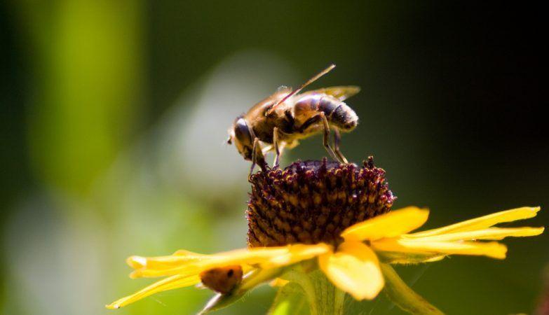 As abelhas compreendem a noo de zero o nmero que representa a inexistncia de algo semelhana dos golfinhos papagaios ou os primatas