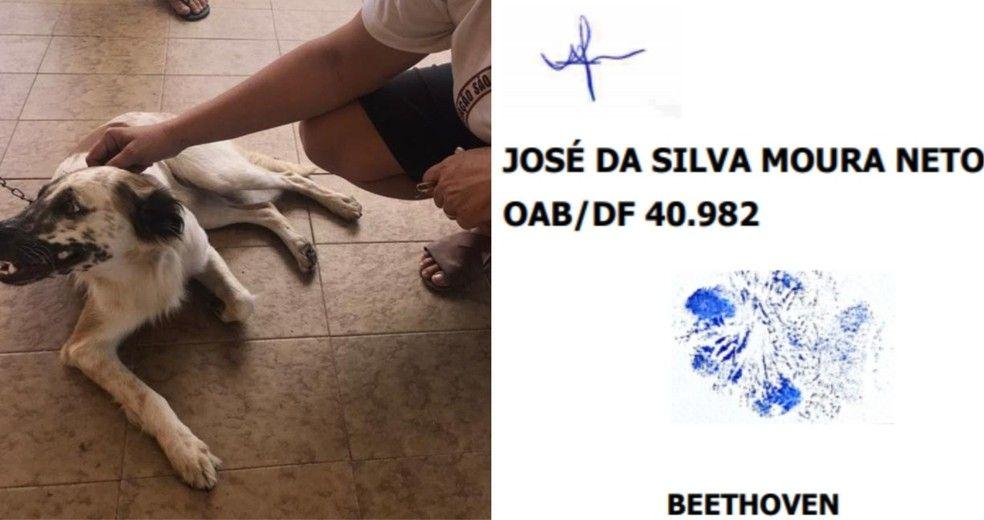 Cachorro Bethoven que move processo contra agressor assinou a ao judicial com a prpria pata Foto Divulgao