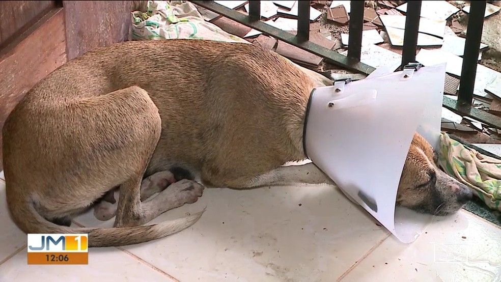 Aps o incidente cadela Lessie se recupera bem Foto ReproduoTV Mirante