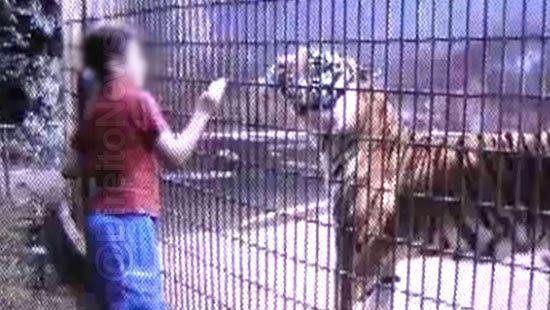 pai menino braco tigre condenado direito