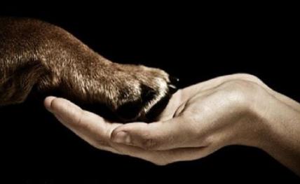 Resultado de imagem para direito dos animais
