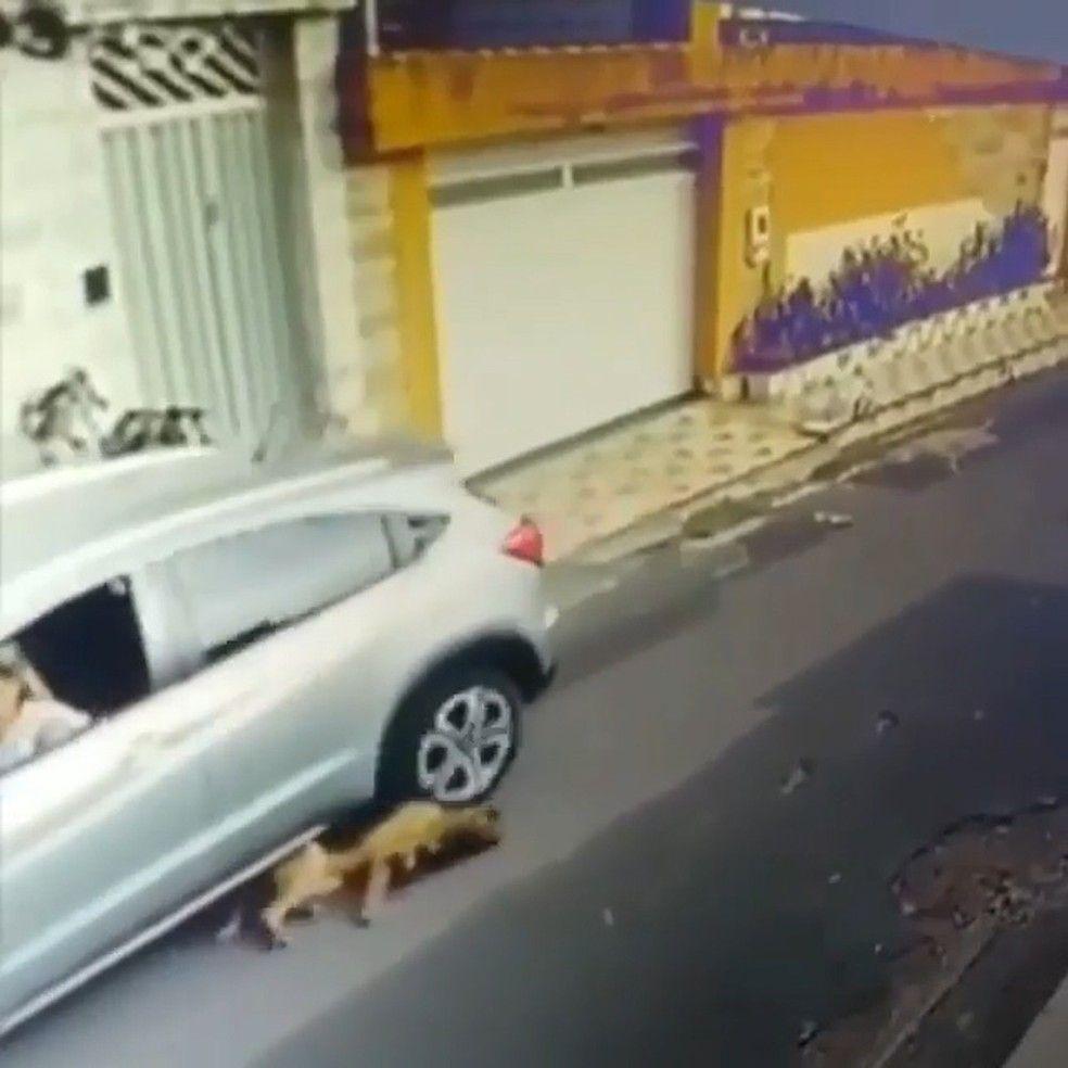 Enfermeira atropela dois cachorros em So Lus Foto ReproduoInstagram