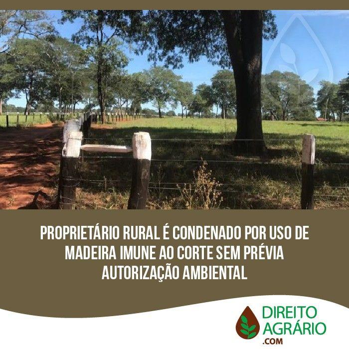 Proprietrio rural condenado por uso de madeira imune ao corte sem prvia autorizao ambiental