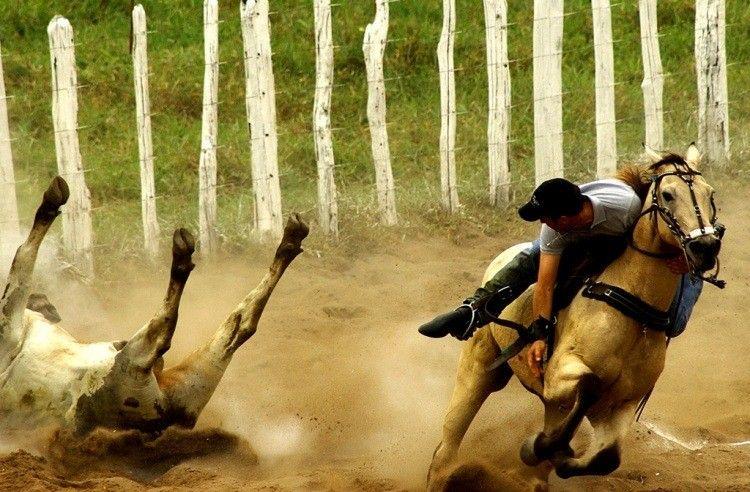 Reynaldo Velloso Cultura e tradio no podem camuflar a prtica de crueldades